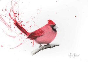 Ashvin Harrison Art- Curious Cardinal