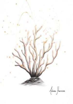 Ashvin Harrison Art- New Coral